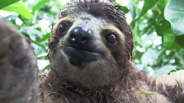 140715-baby-sloth-orphanage-rescue-vin_640x360_304699971673