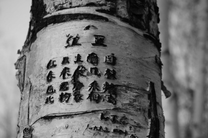 tree-615663_1280